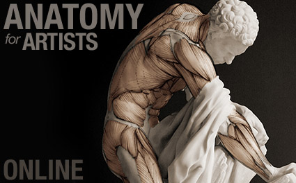 anatomy-course