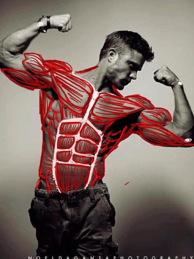 muscle_i
